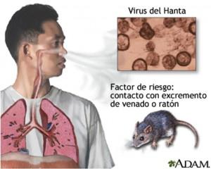 Virus  hanta
