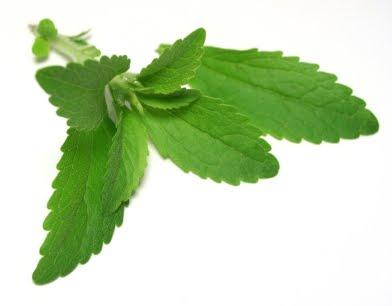 Stevia | pediatraivanjorquera.cl