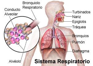 Lista de enfermedades causadas por el tabaco y los
